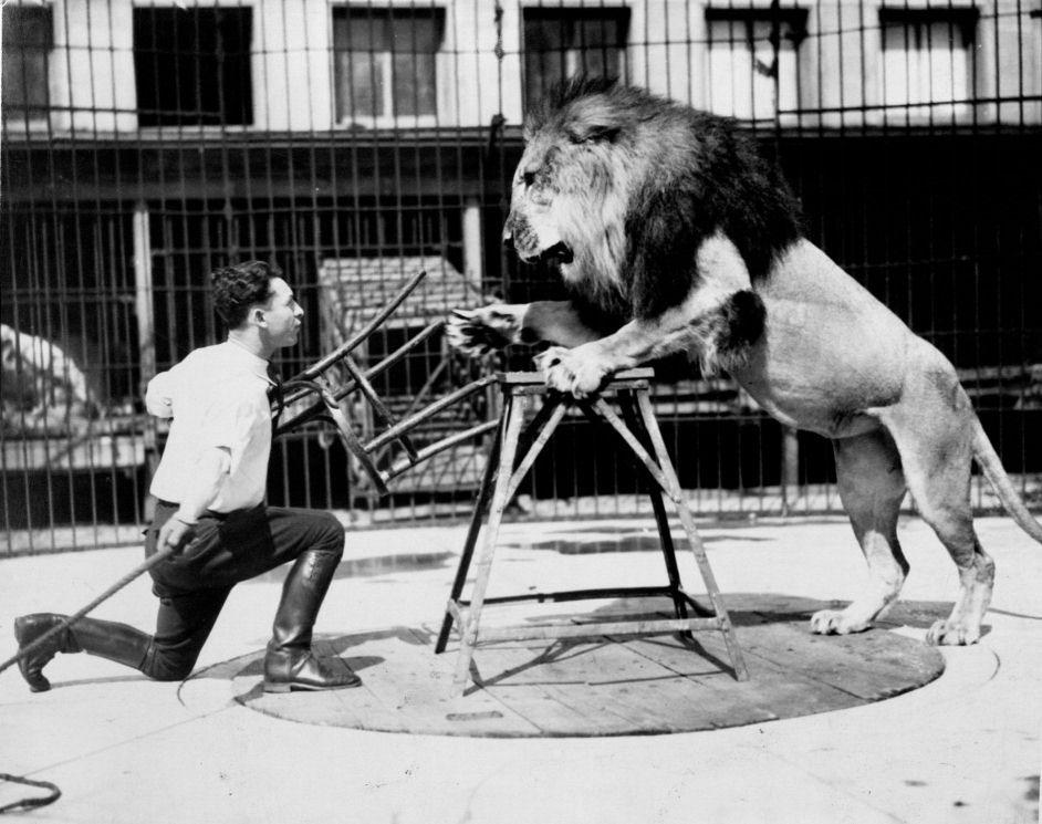 Leijonankesyttaja_web